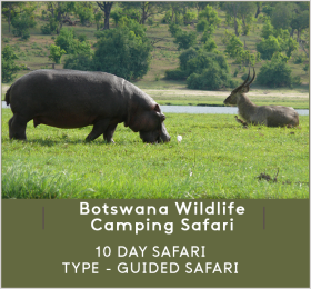 BOTSWANA-WILDLIFE-CAMPING-SAFARI