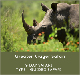 GREATER-KRUGER-SAFARI