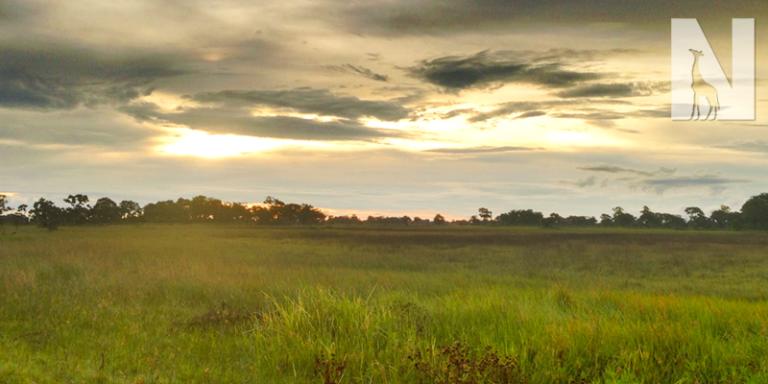 LUXURY-BOTSWANA-SAFARI-HEADER-IMAGE.png
