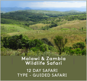 MALAWI-AND-ZAMBIA-WILDLIFE-SAFARI