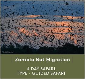 ZAMBIA-BAT-MIGR.png