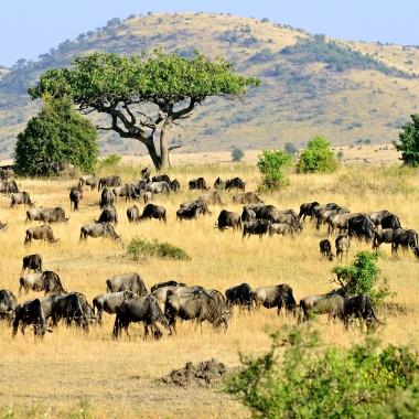Maasai Mara (1)