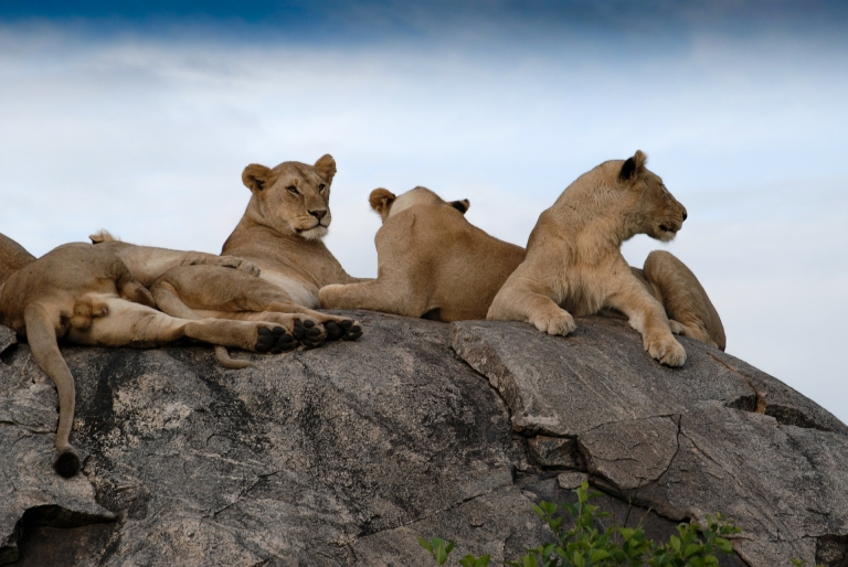 Visit the Serengeti with Nature Travel Africa